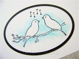 Mb birds 1