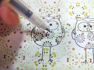 Ha owls 1