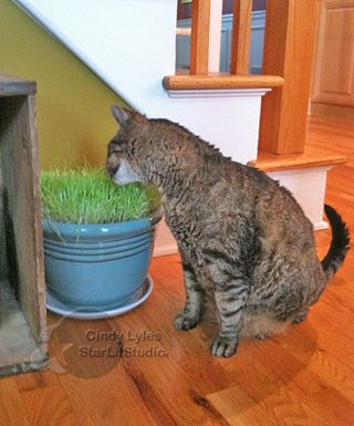 Ryan with cat grass 007